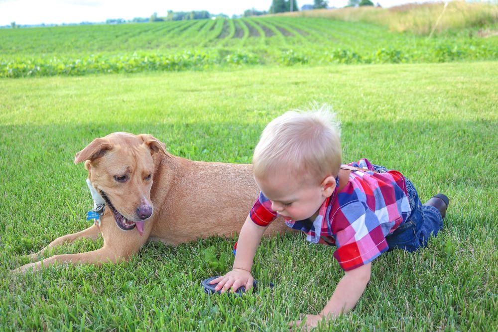 active toddler crawling on dog