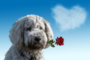 Valentine's Day acts of kindness pet shelter