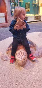 turtle saving at greek exhibit