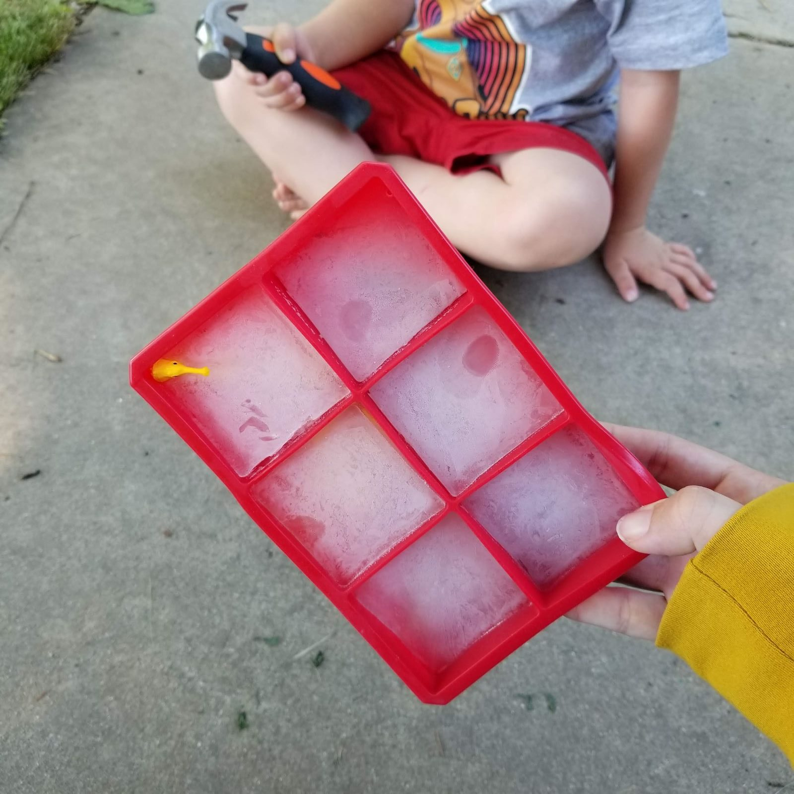 Ice cube tray with frozen animals sensory activity